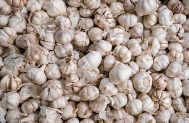 White garlic pile texture. Fresh garlic on market table closeup photo. Pile of white garlic heads.