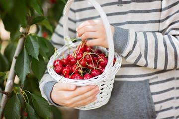 boy picking cherries