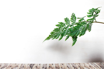 Beautiful Asparagus ferns leaf on white background with empty space for text