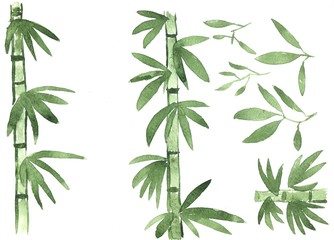 Green trunks, stems and bamboo leaves on white background. Watercolor illustration. Hand-drawn drawing