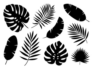Black silhouettes of tropical palm leaves isolated on white background. Exotic plants leaves set. Vector illustration