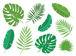 Tropical exotic plants leaves set isolated on white background. Vector illustration