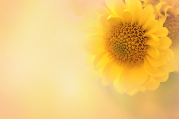 A soft focus yellow flower with text area in a horizontal presentation.