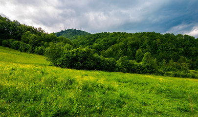 grassy pasture near the forest in stormy weather. natural agriculture concept. beautiful mountainous landscape.