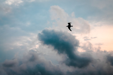 Sea Gull soaring during sunset on a cloudy day