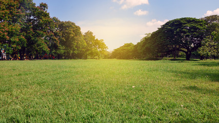Beautiful park and green tree plant in urban public park with green grass field. natural background.