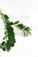 Green tropical leaves on white linen background. Flat lay, top view, copy space