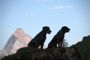 Hunde sitzen auf Stein