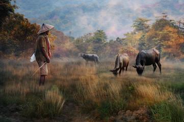 a story of a buffalo shepherd