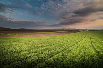 Agricultural landscape, wheat fields