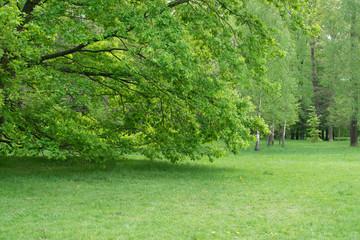 Staande foto Tuin Beautiful Spring Meadow