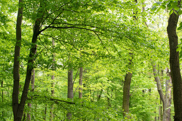 Green Trees in Spring Park
