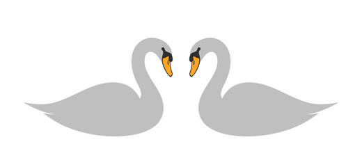 Swan set. Isolated swan on white background