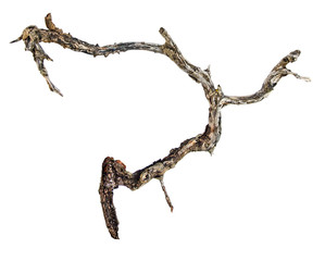 Close up of dry branch
