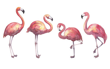 Hand drawn watercolor flamingo isolated