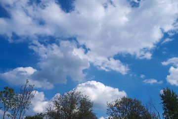 landscape with blue sky, clouds, and tree branches