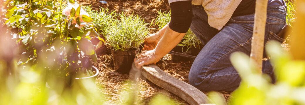 Frau im Garten pflanzt blumen ein (gartenarbeit)