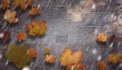 Autumn leaves against grey
