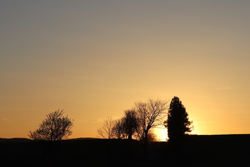 Dark silhouette of trees and cousins against the background of an orange sunset. Evening nature folds to a romantic mood. Warm colors. The region of the temperate climate of the European continent.