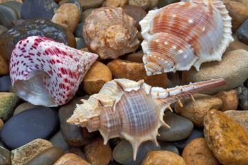Multicolored  sea shells lie on stones