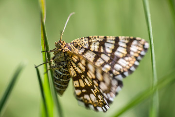 Nice small butterfly sitting on grass with blured background