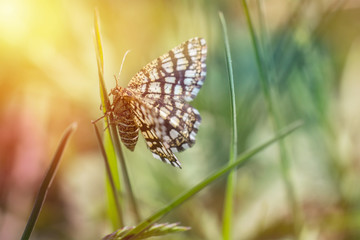 Nice small butterfly sitting on grass, colored photo