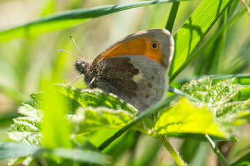 Nice small orange butterfly sitting on grass