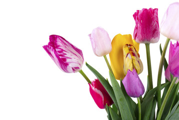 Bouquet of colorful tulips isolated on white background. Spring bouquet.