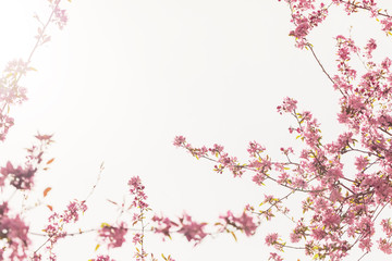 Spring blossom tree flowers against sunny sky