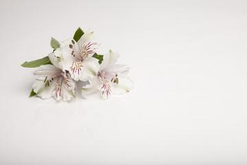 flower, spring, blossom, white, nature