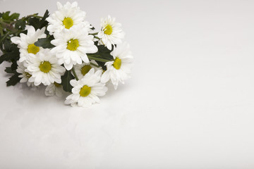 daisy, flower, white, nature, summer, yellow,