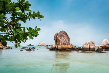 Meeresstrand mit Felsen im Wasser und Baum für Hintergrund