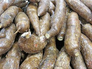 Thornhill cassava 2018