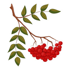 Vector illustration of branch with outline Rowan or Rowanberry