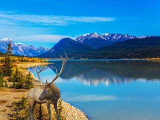 Fantastic deer and Indian Summer