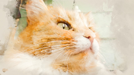 Portrait of a red cat with green eyes