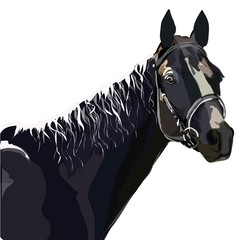 Illustration of a gray horse.