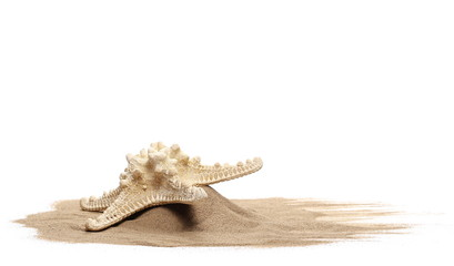 Starfish in sand pile isolated on white background