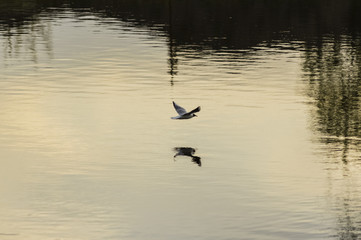gull on the river