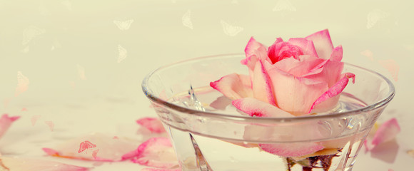 Pink Rose in a bowl of water and petals.