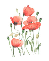Red poppies on a white background, in a watercolor style.