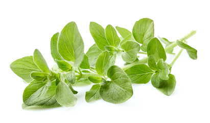 Oregano leaves on white background