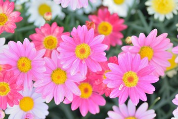 Macro texture of colorful spring Daisy flowers with blurred background in garden