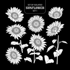 Set of isolated white silhouette sunflower set 1.