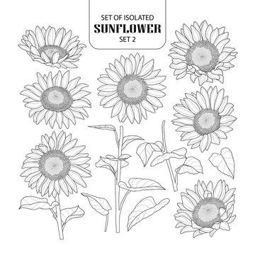 Set of isolated sunflower set 2.