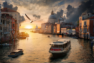 Seagull over Grand Canal