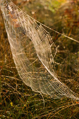 Morning dew on the woven web.