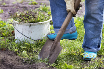 farmer digs a garden and removes weeds