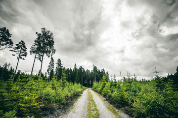 Dirt road going into a forest in cloudy weather