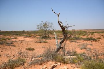 Red desert Australia
